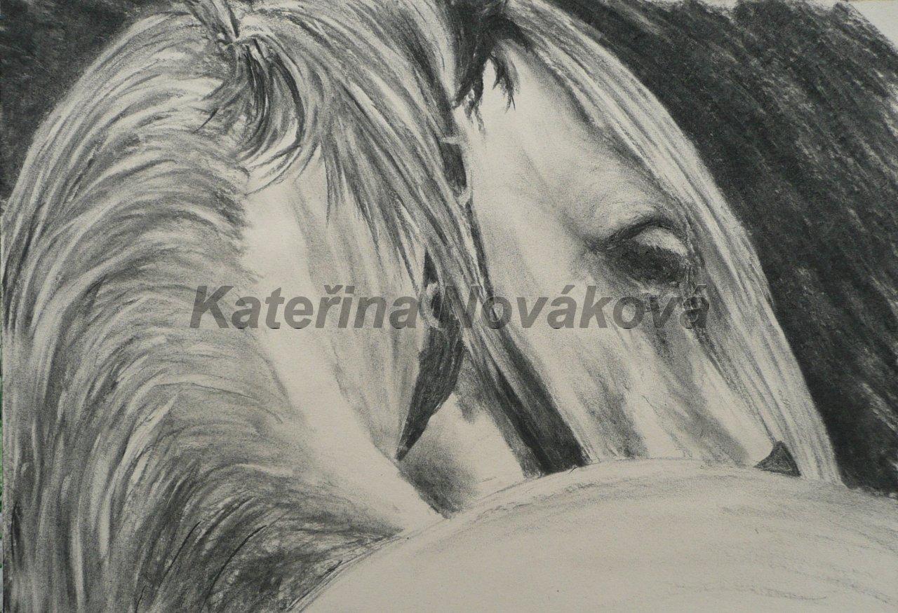 Kresby Malby Katerina Novakova Obrazky Nabidka